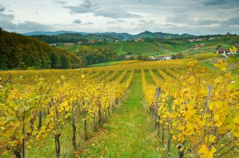 Vineyards in Dolenjska
